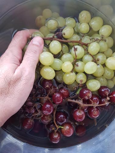 קינוח קייצי מושלם. ענבים. צילום: דביר בר